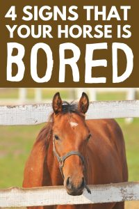 How to tell if your horse is bored
