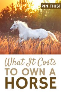 How Much Does Horseback Riding Cost