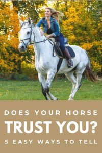 Signs Your Horse Trusts You