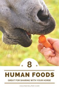 Best human foods for horse