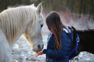 How to tell if your horse trusts you