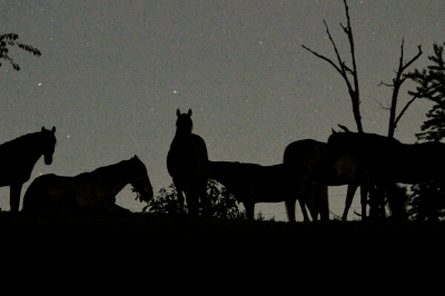 Keeping horses out at night
