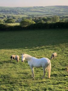 Can you keep horses with sheep?