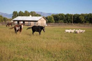 Keeping Horses and Sheep