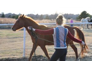 Buying a Horse Round Pen Tips