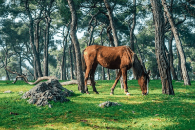 can horses safely live in the woods
