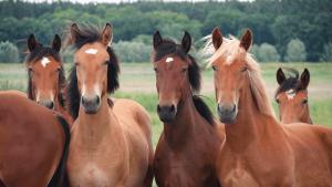 horse abbreviations