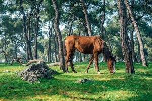 Can horses live in the woods?