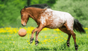 Best American Horse Breeds