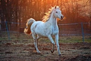 Popular Types of Horses In the US