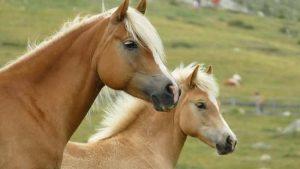 Horse Breeds In America