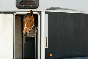 Horse in transit