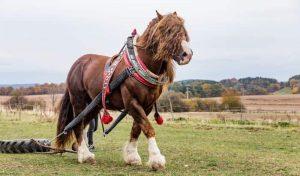 Horses Popular In America