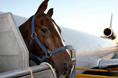 Horse travel expenses