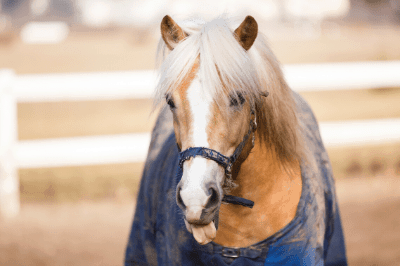 Horse Licking: Why Do They do It?