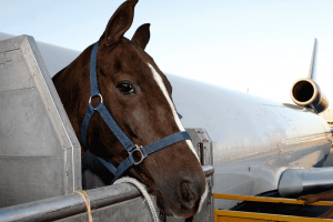 How much does it cost to transport a horse?