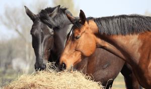 Horse eating supplement