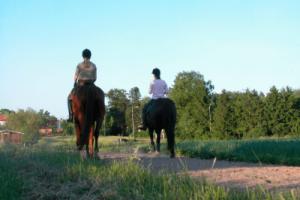 Gaited Trail Horses