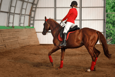 What is a gaited horse?