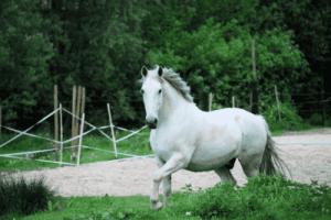 name ideas for white horses