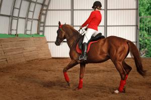 Gaited horseback riding