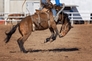 Horse bucking to protect itself
