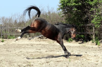 self-defense horse kick