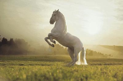 horse names