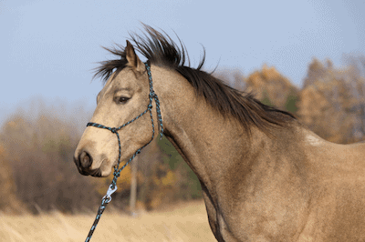 Equipment needed for horse training
