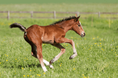 Tips for training a young horse
