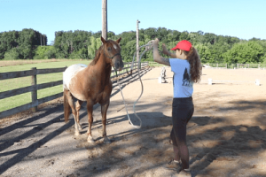 How to make a horse back up