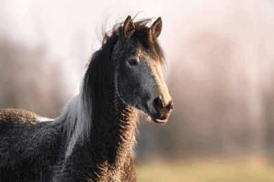 Do horses have fur?