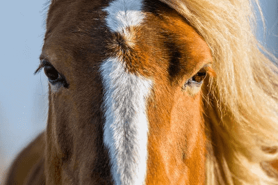 example of horse eyes