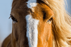 How Horses See