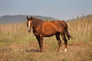 Horse seeing in the dark