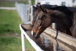 horse drinking diagram