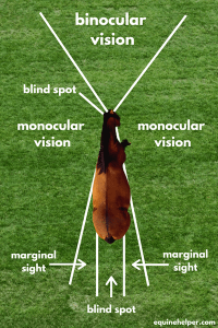 How horses see diagram