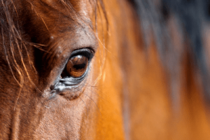 Horse with eye problem